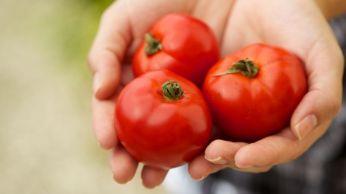 gesunde-tomaten-rezept